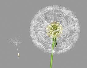 3D model animated dandelion
