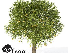 XfrogPlants Grapefruit 3D model