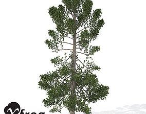 3D XfrogPlants Swiss Stone Pine