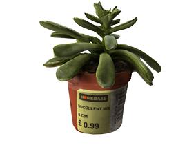 3D model Succulent 02