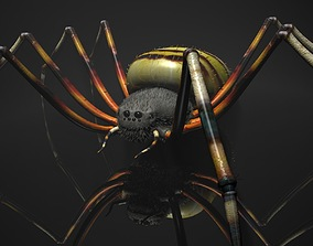 Spider Tiger Rigged 3D model