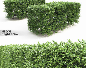 3D Buxus Sempervirens Hedge 01