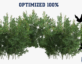 3D asset Lycium Shawii Shrubs Optimized