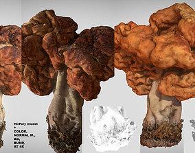 3D Gyromitra brain mushroom turban fungus beefsteak 1