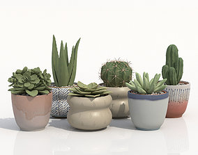 Collection Of Potted Cactus Plants 3D