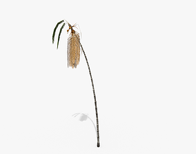 Coconut Palm Tree - Asset 3572H15 3D model