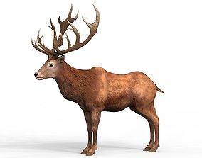 3D asset Red Deer
