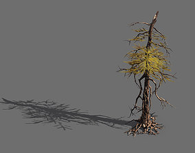 3D model branches-different scales-large fruit-spruce 01