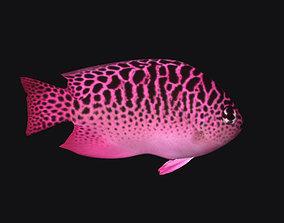 3D model Ocean Fish A