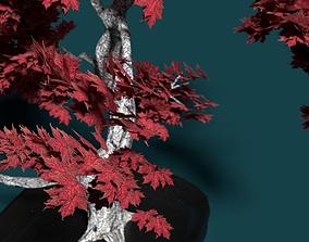 realistictree High Polly multi part Bonsai Maple 3D model