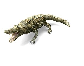 rigged Crocodile Rigged 3D Models game ready
