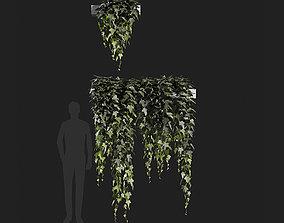 3D model Hedera helix English ivy-06