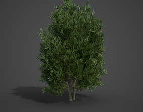 2021 PBR English Yew Collection - Taxus Baccata 3D