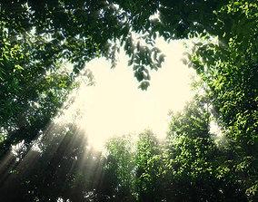Forest Scene 009 3D