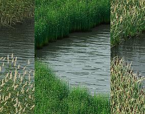 Water Plants phragmite 3D model