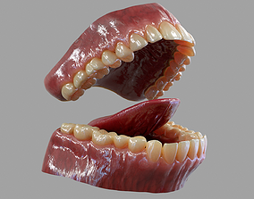 Gums Teeth and Tongue 3D model low-poly