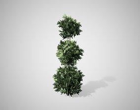 3D asset American Boxwood Topiary bush
