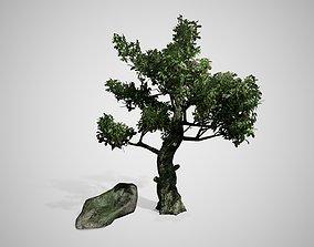 Kingsville Boxwood Tree 3D model