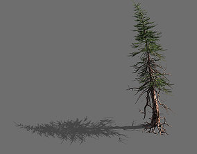 3D branches-different scales-large fruit-spruce 06