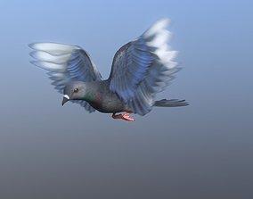 3D model Medium Detail Animated Pigeon