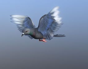 Medium Detail Animated Pigeon 3D asset