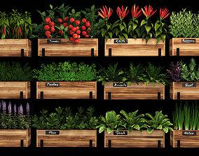 Home plants onion 3D model