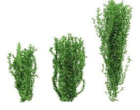 Green bushes 3D model