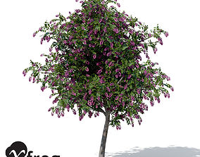 XfrogPlants Giant Crape Myrtle 3D model