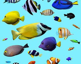 3D asset low-poly 23 Aquarium fish