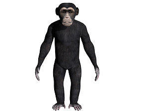 3D model rigged Chimpanzee
