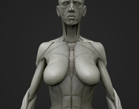 Full body muscle and skeleton anatomy 3D model