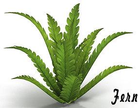 3D asset Fern bush