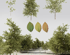3D Tree pack A