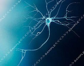 3D asset Neuron-Model