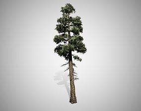 Douglas Fir Tree 3D asset