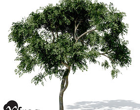 3D XfrogPlants Curry Leaf Tree
