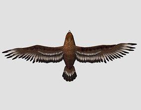 3D asset Eagle modal