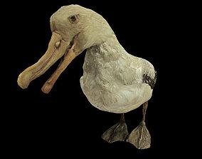 Albatross mallemuck bird 3D model