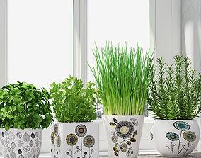 3D Herbs in pots