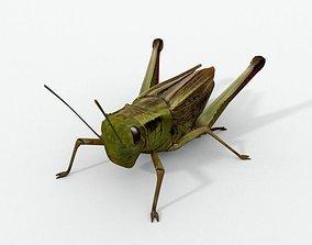 3D model game-ready Grasshopper