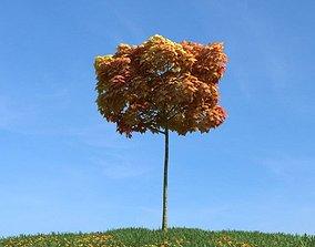 3D model Autumn Tree