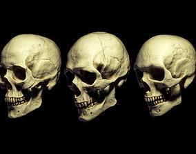 3D SKULL MODELS - HUMAN PACK