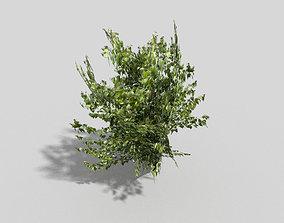 3D model VR / AR ready Tree