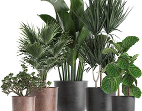 Decorative plants in flowerpots 836 3D