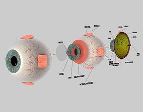 Human Eye Cross Section Eyeball 3D model