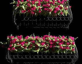 3D Facade Geranium Plant