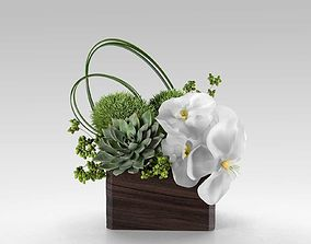 3D Phalaenopsis Orchid And Succulents in Box