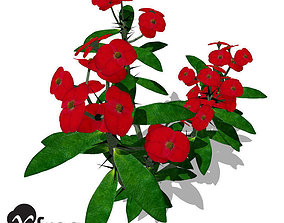 3D XfrogPlants Crown of Thorns 1