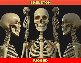 rigged Human Skeleton Rigged 3D