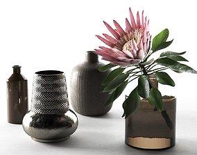Amazing Protea Eximia Sugarbushes 3D